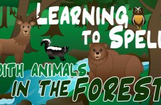 Forest Animals Video for Children